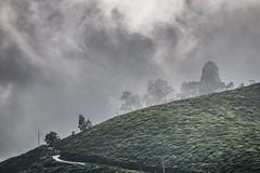 Clouds over a Tea Plantation (voxpepoli) Tags: nuwaraeliya centralprovince srilanka tea teaplantation hill hills clouds sky