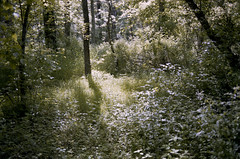 Untitled // Woods (JeffWellerPhotography) Tags: world trees light shadow sun sunlight color tree green film nature leaves forest 35mm landscape photography woods bright live diary ground cover growing lush jeffweller