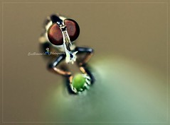 IMG_9267The Aliens landed!!! (EricBronson's Photography) Tags: macro aliens have landed