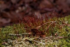 Moos (archegonus) Tags: pflanzen vegetation grn olivgrn hellgrn rotgrn gelbgrn moosgrn blaugrn grasgrn dunkelgrn blassgrn flaschengrn grnlich grnpflanzen graugrn sattesgrn farbederhoffnung braungrn dunklesgrn leuchtendesgrn ppigesgrn krftigesgrn wucherndesgrn