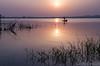 In search of livelihood (sakthi vinodhini) Tags: kolavai lake chengalpet sunrise fishermen fishing reflections cwc530 outdoor sky serene landscape shore
