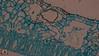 Under the Microscope: Sporophyll of Pteridium (Trav H) Tags: alternatinggenerations bracken dennstaeditaceae fern focusstacking highmagnification micrograp micrograph microphotograph microscope microscopy plant pteridium spore sporophyll underthemicroscope photomicroscopy slides