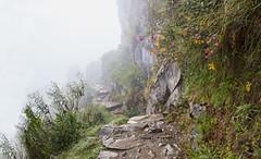 Trail to Sun Gate - 02 (cheryl strahl) Tags: peru machupicchu andes historic ancient inca trail incatrail entrance gate climb cloud mist fog flowers stones path