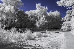 Ladywell Fields (blackwoodse6) Tags: park uk blue england white london ir nikon lewisham bluesky infrared foilage southlondon ladywell falsecolour southeastlondon londonparks 720nm ladywellfields nikond300