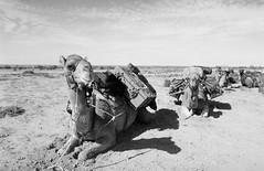 RAD20160610_025 - Munga Thirri Expedition (Kodak BW400CN) (Cecilia Temperli) Tags: rad20160610 arollinadayadayinaroll australia camelexpedition camels dromedaries dromedary trekking desert packcamels film kodak kodakbw400cn nikon nikonfm3a simpsondesert mungathirrisurveyexpedition australiandesertexpeditions