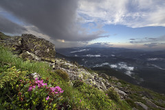 Breath-taking rhododendron flower above the clouds (Taras L) Tags: morning travel pink light summer sky sun sunlight mist plant mountains flower nature ecology floral grass rain fog clouds season flora heaven blossom outdoor wildlife meadow ukraine ridge rhododendron bloom environment idyllic carpathian