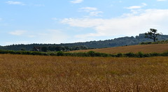 Wye Valley Summer (Richard Bevan Photography) Tags: wye valley monmouth wales summer wheat landscape beautiful