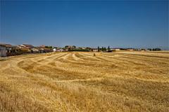 Landscape of Extremadura / Spain (zilverbat.) Tags: spanje travel landscape zilverbat spain postcard wallpaper tour wheatfields grainfield cottonfields canon corn europe extremadura tourism
