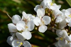 WWG11DSC_5823 (kjemem) Tags: orkney scotland wookwickhouse flower flowers