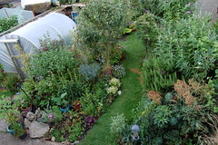 Looking Down on the Back Garden - July 2016 (basswulf) Tags: backgarden polytunnel d40 1855mmf3556g lenstagged unmodified 32 image:ratio=32 permissions:licence=c 20160724 201607 3008x2000 garden normcres oxford england uk lookingdownonthegarden