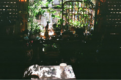 Summer on the balcony (inmost_light) Tags: gardening coloring book film analog analogue plants balcony 35mm garden tea teacup