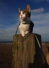 Mi (dagomir.oniwenko1) Tags: cat mi canon color skegness animals lincolnshire england uk sigmadc1750