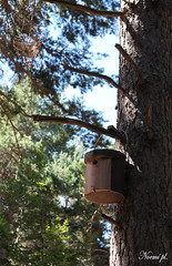 (Noem pl.) Tags: rbol natural aire libre ramas caseta pjaros