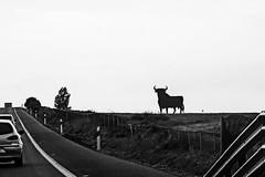 El Toro (Lanpernas 2.0) Tags: espaa andaluca spain arte carretera pop silueta icono osborne iberia eltoro dehesa mercadotecnia emblema ca manoloprieto autovadelsur