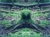 Waldgeist #1 Spirit of the forest #1 (S.Selzer) Tags: monster statue forest mirror spider woods spirit spiegel phantom root holz wald wurzel waldgeist weiskirchen