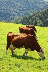 Tres en raya (Salva Pags) Tags: verde green field three cow tres prado vaca verd noughtsandcrosses prat tresenraya