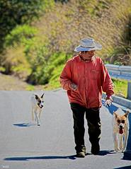 Al trabajo (Blas Torillo) Tags: people man dogs méxico mexico nikon gente streetphotography perros puebla professionalphotography campesino farmlaborer fotografíaenlacalle fotografíaprofesional mexicanphotographers d5200 fotógrafosmexicanos nikond5200