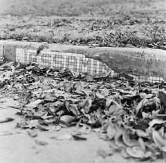 Jessamine (Jamie Powell Sheppard) Tags: street blackandwhite 120 film mediumformat texas mosaic tiles curb fortworth jessamine trix400 ryanplace arax88