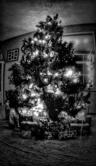 IMG_7160.JPG (Jamie Smed) Tags: christmas trees winter decorations ohio blackandwhite bw usa holiday tree beautiful beauty canon lens photography eos rebel prime evening blackwhite focus midwest december glow cincinnati dramatic wideangle fisheye fixed manual dslr christmaseve celebrate decorate manualfocus hdr app 2014 hamiltoncounty 500d handyphoto smed rokinon dramaticblackandwhite teamcanon dramaticblackwhite t1i iphoneedit jixipix rokinin snapseed jixipixsoftware jamiesmed appjamie bwjamie
