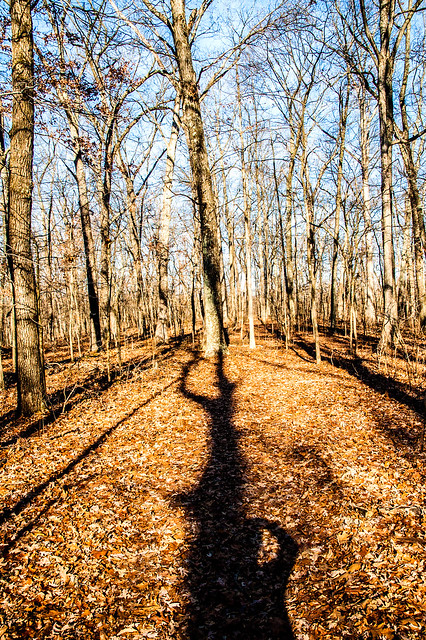 Lincoln State Park - (Sarah) Lincoln's Woods Nature Preserve - January 5, 2015
