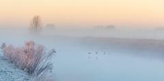 Flight to white infinity (Ingeborg Ruyken) Tags: morning autumn sky mist ice fog sunrise landscape dawn haze nevel flickr frost december herfst freezing lucht polder ochtend landschap facebook ijs boerderij vorst zonsopkomst kruisstraat natuurfotografie vriezen 2013 500px catwaterfowlinflight catsunriselandscape catfogandmist