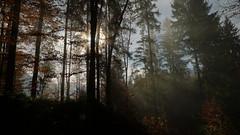 Sonnenstrahlen (Aah-Yeah) Tags: sun sunlight sunshine fog bayern nebel foggy sunrays sonne sunbeam sonnenstrahlen sunray sunbeams sonnenschein achental morgennebel sonnenlicht chiemgau bodennebel
