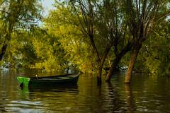 Inundacin (martinnarrua) Tags: trees naturaleza green nature water argentina ro river boat entre ros coln inundacin nikond3100