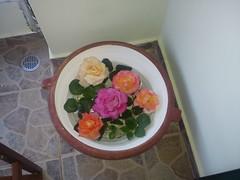 DSC00286 (amalia_mar) Tags: flowers roses nature garden greece     sonyericssone10i
