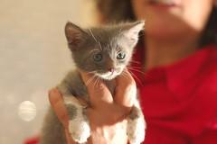 1 (928) (CATS - DOGS) Tags: people dog cats love cat puppy bedroom feeding kitty care kedi kpek yavru