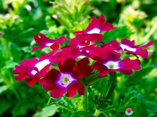 EyeEm Best Shots - Flowers Flowers,Plants & Garden Floralperfection