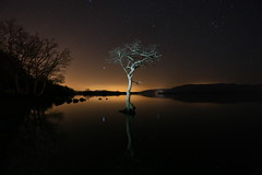 That tree again (JamieD888) Tags: tree stars nightshot lochlomond millarochybay