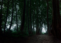 Please give me some light (Gustavo P Santiago L) Tags: light mist green nature forest landscape real woods alone natural sony silence unreal alpha mystic 6000 a6000