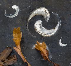 Jurassic Yin Yang (SkyeWeasel) Tags: macromondays opposites fossil gryphaea devilstoenails yinandyang yinyang seashore scotland skye broadford broadfordbay