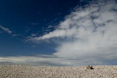 Peace (StickyToffeeQueen) Tags: beach clouds bluesky morayfirth speybay