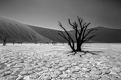 Deadvlei (Liliya Kazil) Tags: namibia deadvlei sossusvlei desert dry sand dunes sky landscape nikon nikond610 tamron africa          namibsesert saltpan
