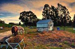 Rural Retreat (Kevin_Jeffries) Tags: horse shed shack grazing farm rural idyllic