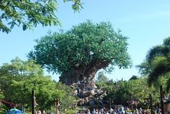 Disney's Animal Kingdom - Discovery Island - Tree of Life (jrozwado) Tags: northamerica usa florida waltdisneyworld animalkingdom discoveryisland treeoflife sculpture