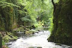 Ness Glen (lewi1553) Tags: gorge rockgorge walk riverdoon ayrshire gallowayforestpark nature river