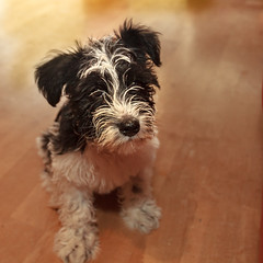 Bin immer noch leicht beleidigt (rentmam1) Tags: dog hund lenny