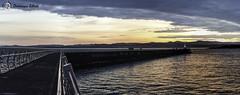 Port de victoria (dodo-12-37) Tags: victoria canada bc ile de vancouver plage bernache panoramique oiseau cerf volant olympic mountain bouchart garden reflet fleurs arbre fontaine