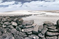 Zigzag wall, Dartmoor (Sean Hartwell Photography) Tags: infrared ir falsecolour canoneosm drystonewall wall dartmoor widecombe devon westcountry nationalpark zigzag farming pasture countryside england uk