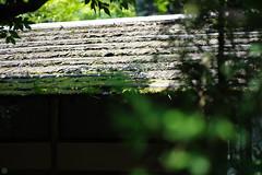 20160806-DS7_2057.jpg (d3_plus) Tags: tamronspaf90mmf28macro building d700 thesedays  walking architecturalstructure     urban  tamron90mm museum sky  tamronspaf90mmf28 japan streetphoto tamronmacro dailyphoto nikon art   street daily garden    architectural spaf90mmf28macro11  bokeh nikond700 172e macro scenery   172en tokyo   tamron  tamronspaf90mmf28macro11