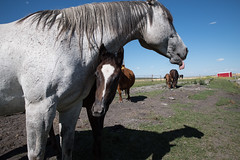 Mares and foals (ams photos) Tags: horse horses foal mare farm ranch