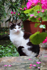 Gattina di Grisignana (Elisa Medeot) Tags: cats gatti animals cute love animali carini bellezza canon natura nature beauty grisignana croazia