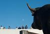 (anto291) Tags: camargue lessaintesmariesdelamer arena arènes toro luna