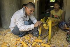 CSISA agricultural mechanization engineer Subash Adhikari adjusts a maize shelling machine on a farmers verandah in Rambasti, Kanchanpur. (CIMMYT) Tags: nepal csisa cimmyt maize agriculture smallholder farmer mechanization asia