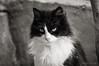 Princesa 4 (susodediego ) Tags: bw grancanaria cat chat gato katze princesa soe sanmateo autofocus greatphotographers thegalaxy frameit simplysuperb olétusfotos rememberthatmomentlevel1 magicmomentsinyourlifelevel2 vpul01 infinitexposure shejala