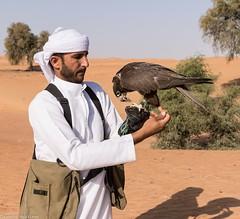 8Q2A0894_DxO (maskirovka77) Tags: dubai desert hunting beak raptor owl falcon hood sharjah unitedarabemirates falcons raptors avian barnowl hunt birdsofprey lure birdofprey falconry talons natureconservancy stooping falconeer peregrinefalcon gyrfalcon pergrine falconexperience alshuwaib arabiandeserteagleowl royalshaheen clawsarabiandeserteagleowldubainatureconservancypergrineraptorsroyalshaheenbirdofpreybirdsofpreyfalconfalconexperiencefalconsowlraptoralshuwaibsharjahunitedarabemirates