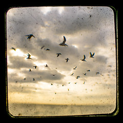 MIKE4677-gulls-atlantic-flagler (Michael William Thomas) Tags: ocean wedding sky sun beach photography buffalo photographer florida gulls manatees mikethomas michaelthomas mtphoto michaelwthomas