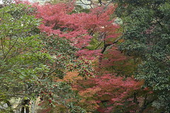 (ddsnet) Tags: travel plant japan sony cybershot autumnleaves  nippon   autumnal nihon  backpackers     rx10 osakafu